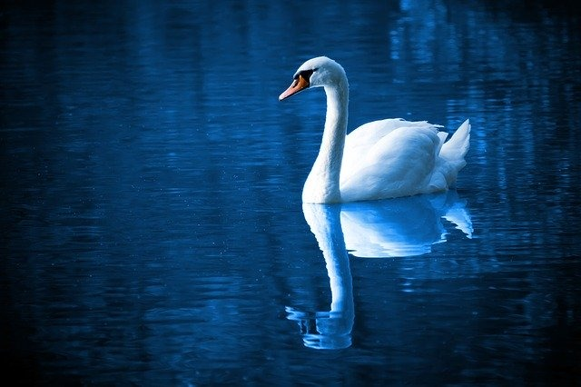La mente allo specchio - La comunicazione oltre il canale verbale in relazione con la sofferenza psicologica.